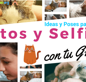ideas para tomarte fotos con tu gato