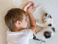 durmiendo con el gato