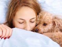 durmiendo con su canino