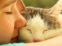 gato posando con su mamá