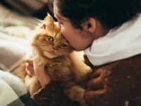 gato recibiendo un beso